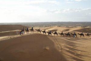 SIT camels
